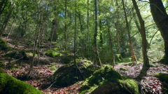 Magical beautiful old green forest mossy trees trunks roots woods sunny dolly Stock Footage