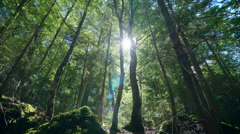 Beautiful green forest gleam deep woods trees dolly nature sunny sun rays Stock Footage