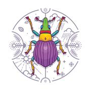 Insect Beetle Bug Design Elements with Line Graphic. Stock Illustration