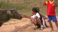 Children playing with a playful buffalo in thailand Stock Footage