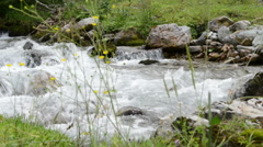 Forest and wild stream at Zillertal valley Schwarzachtal (Austria) Stock Footage