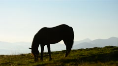 One horse grazing at dawn on background of mountains Stock Footage