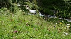 Wild stream at Zillertal valley Schwarzachtal Stock Footage