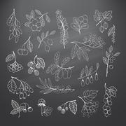 Set of garden and wild hand-drawn chalk berries Stock Illustration