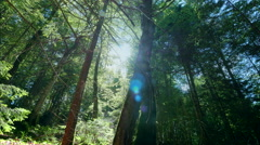 Beautiful deep pristine forest dolly tree sun rays sunbeams flash green woods Stock Footage