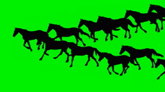 ANIMATED GALLOPING HORSES  Hand drawn animation. Stock Footage