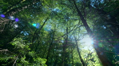 Forest low angle view dolly motion sun rays sunbeams flash green woods trees Stock Footage