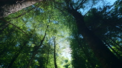 Low angle dolly beautiful pristine deep forest sun shine sky green trees trunks Stock Footage