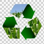 Recycle Symbol of a Field of Corn Stock Illustration