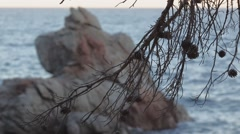 Lloret de mar sea and pines Stock Footage
