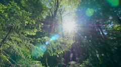 Beautiful forest gleam sunshine deep green woods trees dolly sunny summer Stock Footage