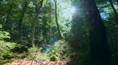 Beautiful deep green forest sun rays shining dolly shot Stock Footage
