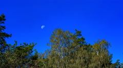 Blue sky with Moon setting behind trees. 4k timelapse Stock Footage