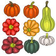 Set of pumpkin vegetable vector clip art Stock Illustration