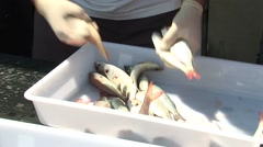 Close up on man handling fish on fish market Stock Footage