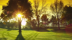 Panning Shot of the Sun Coming Through a Tree on a Golf Courts Fairway Stock Footage