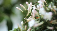 Close up view of flowers blossoming bud Stock Footage