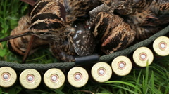 Extracted bird hunting snipe in the hands of a hunter. Stock Footage