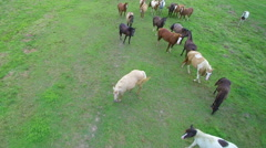 Slow motion aerial pull away from a herd of horses Stock Footage
