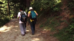Two young women converse while walking a beautiful forest path. Moving shot Stock Footage