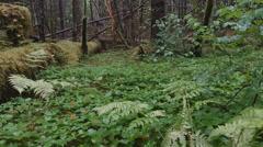 Jib up-Rain falling in verdant Alaskan rain forest-gyro stabilized Stock Footage