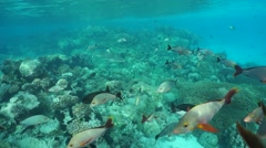 Coral reef with fish and shark Pacific ocean Stock Footage
