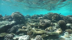 Corals in shallow water on reef flat Pacific ocean Stock Footage