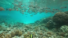 Shoal of fish feeding snapper underwater sea Stock Footage