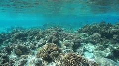 Underwater coral reef shallow water Pacific ocean Stock Footage