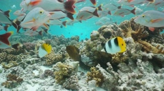 Underwater coral reef tropical fish and moray eel Stock Footage