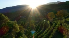 Sunset in the Prosecco region Stock Footage