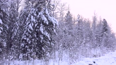Snowfall in the forest. Stock Footage
