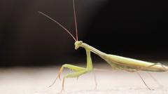 Italian mantis Stock Footage