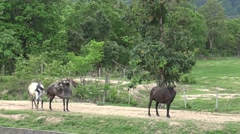 Horse walking on local road,Nature background. Stock Footage