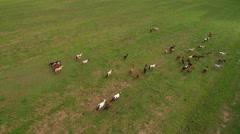 Aerial shot of large herd of horses in meadow Stock Footage