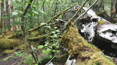 PAN-Aircraft wreckage 1957 Alaskan ANG crash in rain forest Stock Footage