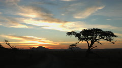 African Wilderness Sunset Stock Footage