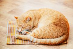 Peaceful Orange Red Tabby Cat Male Kitten Sleeping In His Bed On Laminate Floor Stock Photos