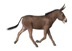 3D Rendering Donkey on White Piirros