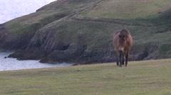 Horses walking on hillside near the sea Stock Footage