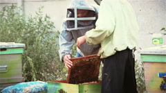 Two beekeepers shake bees from honey frames Stock Footage