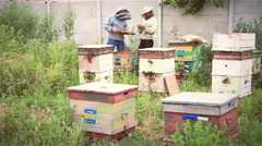 Two beekeepers happily work in the apiary with the bees Stock Footage