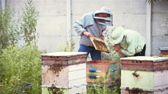 Two beekeepers are holding in the hands of a bee frame with bees in the apiary Stock Footage