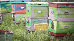 Two beekeepers move the hives with bees in the apiary Stock Footage