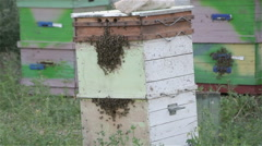Many bees are sitting and flying in the apiary Stock Footage