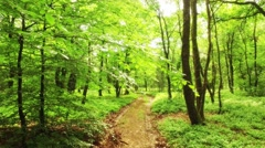 Moving through the forest while passing by branches with leaves Stock Footage