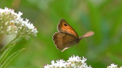 Beautiful butterfly flying Stock Footage