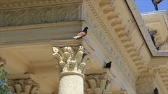 Doves on cornice building Stock Footage