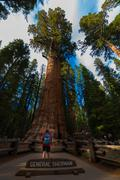 Hiker, admiring Giant Sequoia trees General Sherman Stock Photos