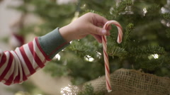 Closeup Of Child's Hand As They Place A Candy Cane On A Christmas Tree Stock Footage
